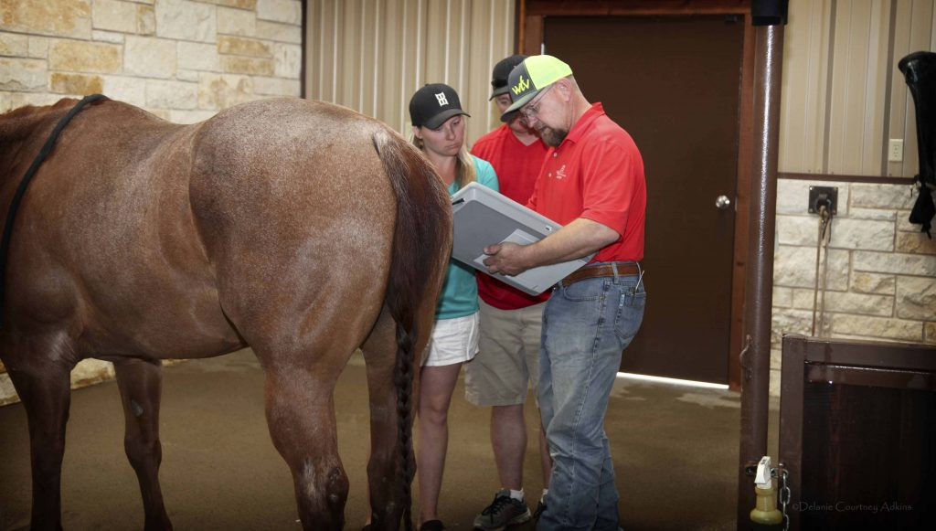Equine Veterinarian Near Me in Abilene, TX | West Texas