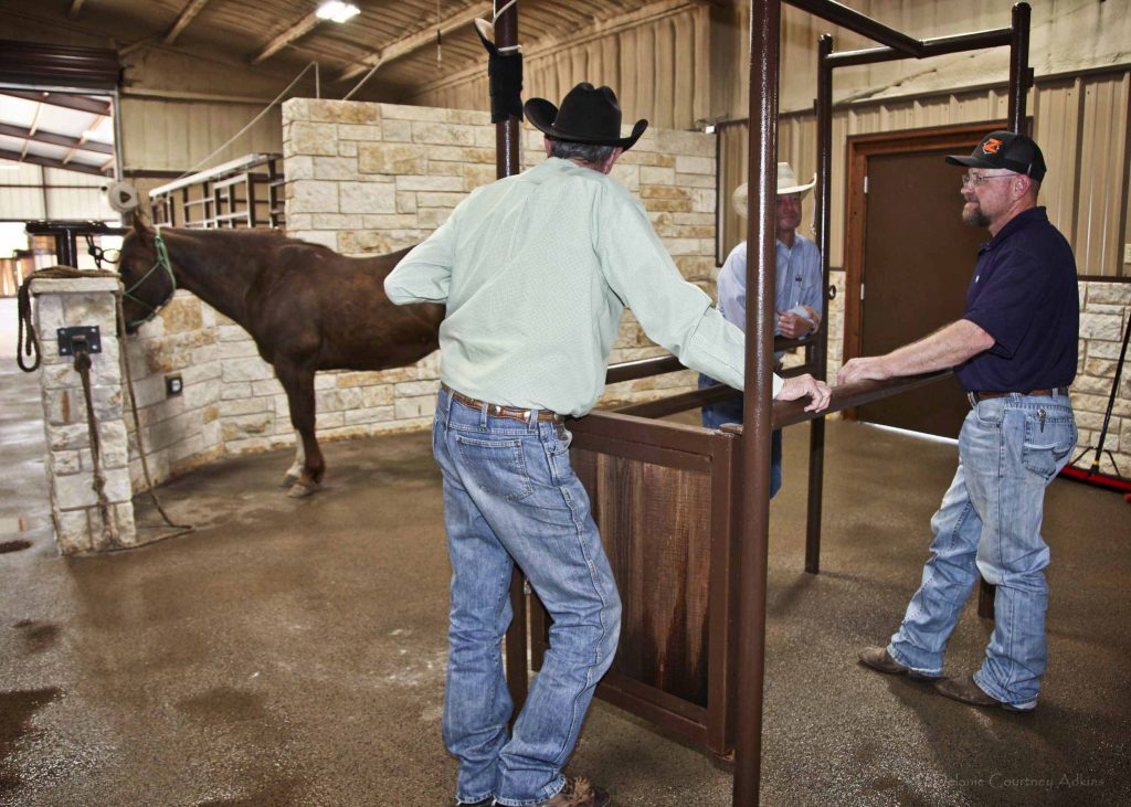 About Our Equine Veterinarian Clinic In Abilene Tx West
