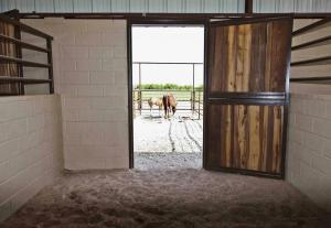 16Foal Mare indoor outdoor stall